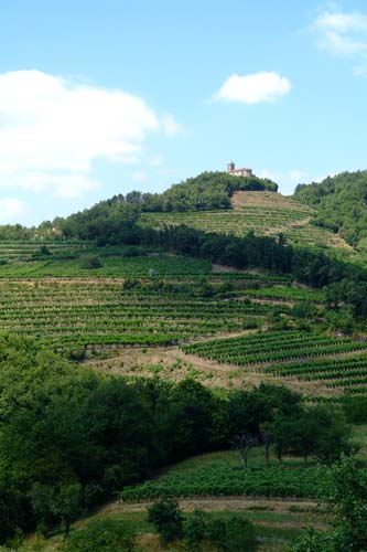 Hilltop village and vineyard